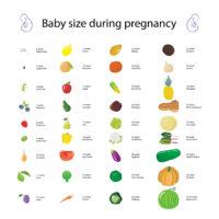 First Trimester Weeks 4-14 - NeuroticMommy pregnancy week by week. #pregnant #moms